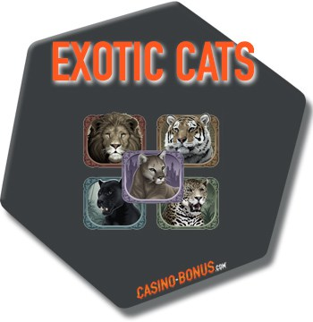 online casino slot exotic cats microgaming